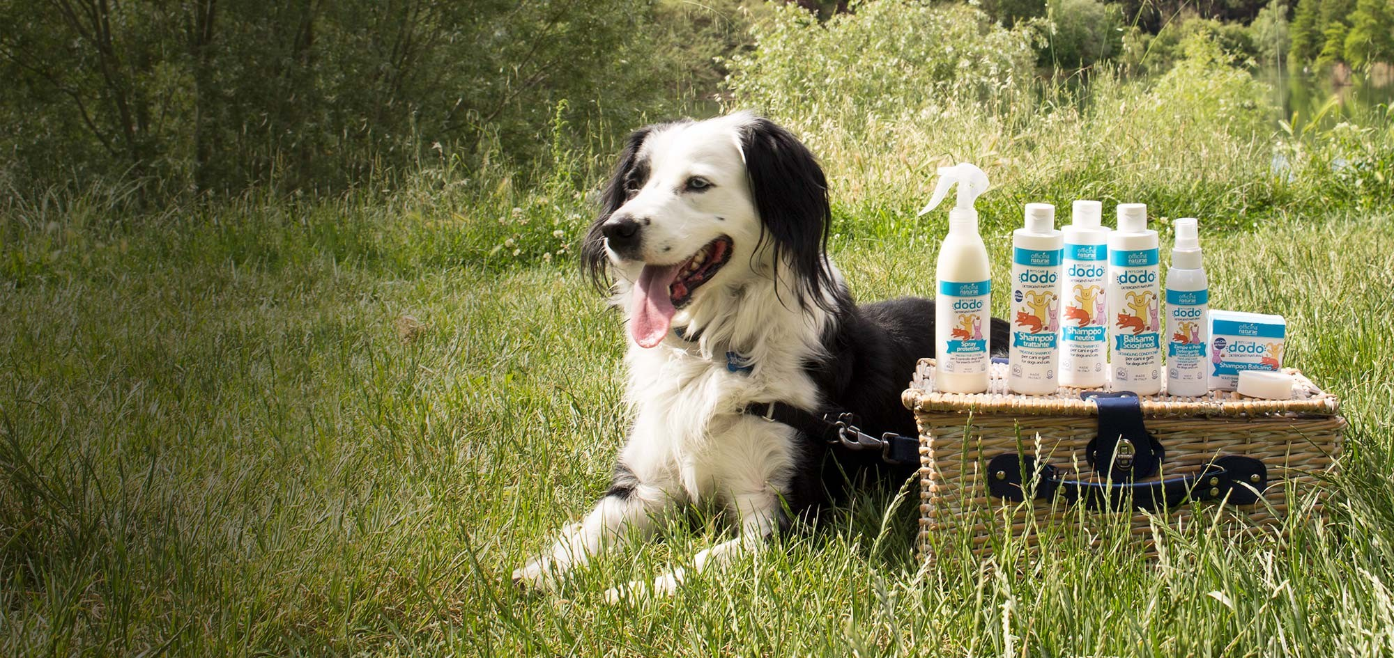New products and new formats for DODO PET'S CARE